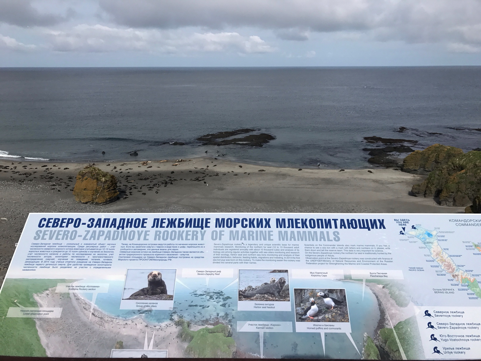 Information boards and view on the rookery. Photo by Evgeny Mamaev