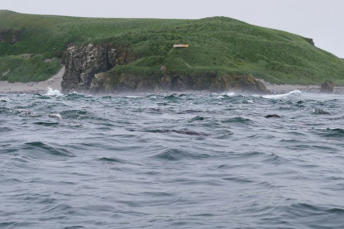 The North-West Cape on Bering Island was formed during the 3rd, final stage of volcanism on the islands. Photo by Eugene Mamaev