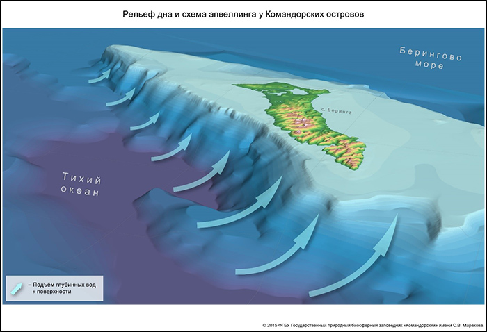 The bottom configuration of the Commander islands and the upwelling scheme